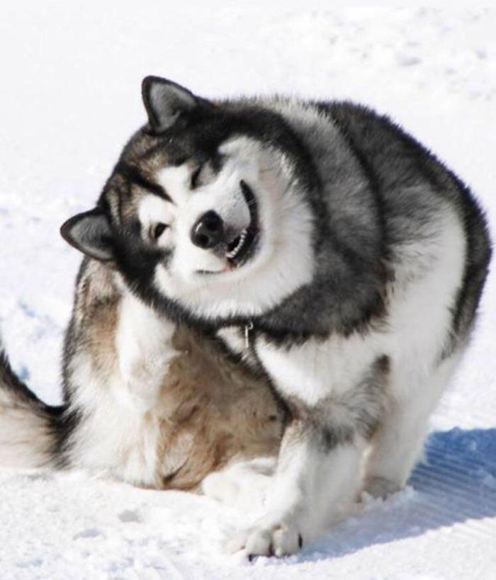 smiling floof dog israel