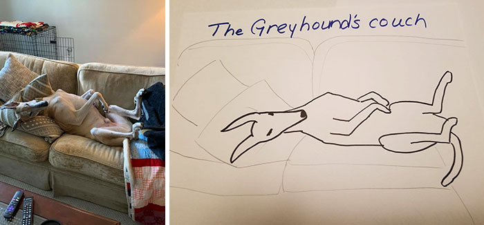 the greyhound's couch
