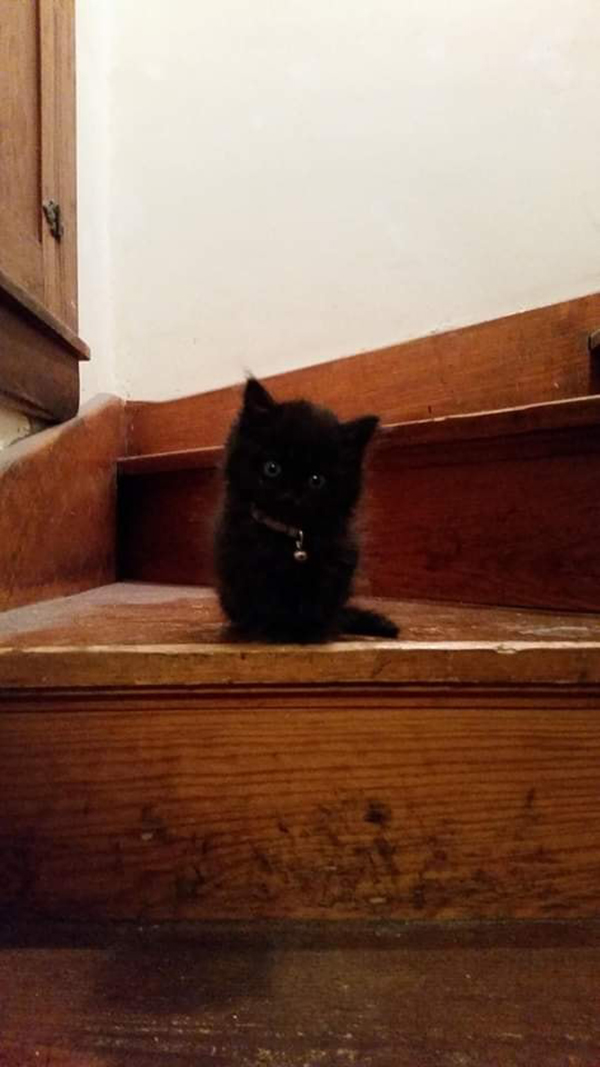 charcoal black kitten sitting on stairs
