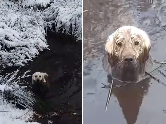 toby swamp dog