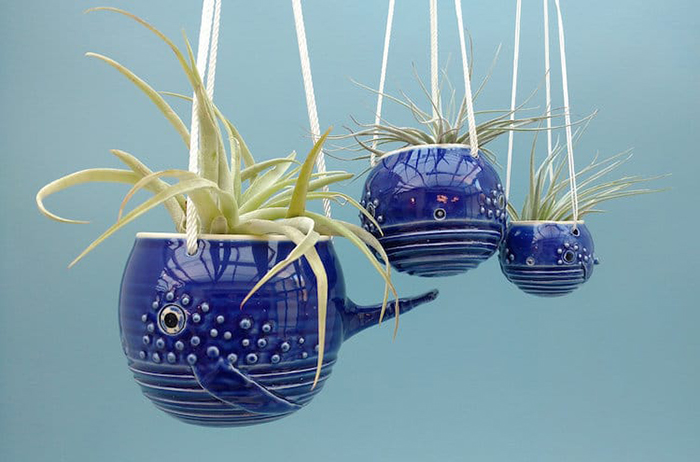 whale air plant pot in three sizes