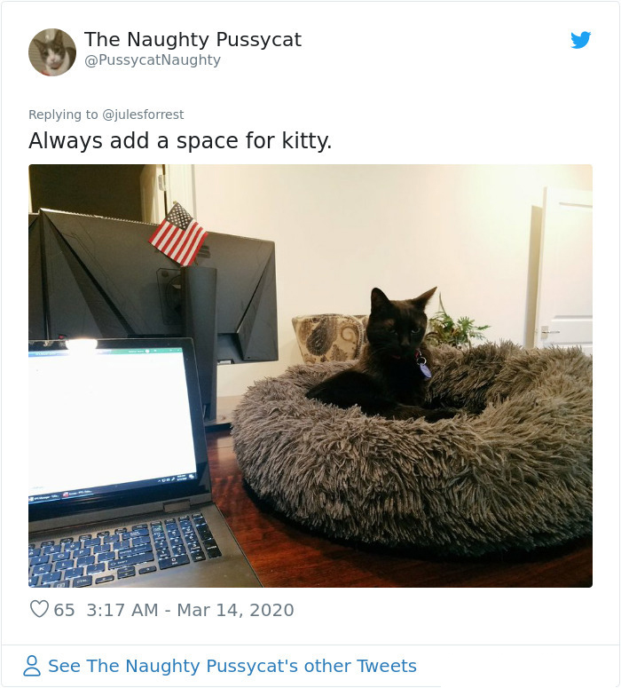 work-from-home policy cat space