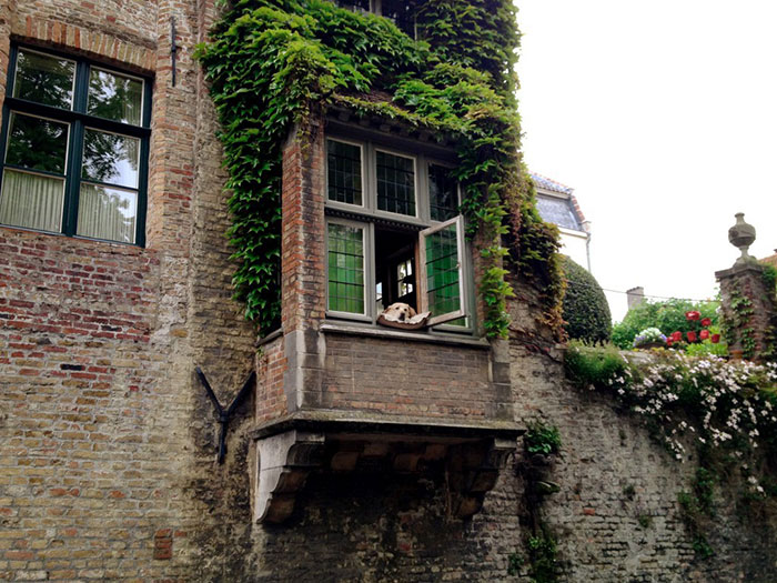 yellow lab overlooking cote canal bruges