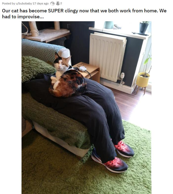 ziggy sitting on fake human laps