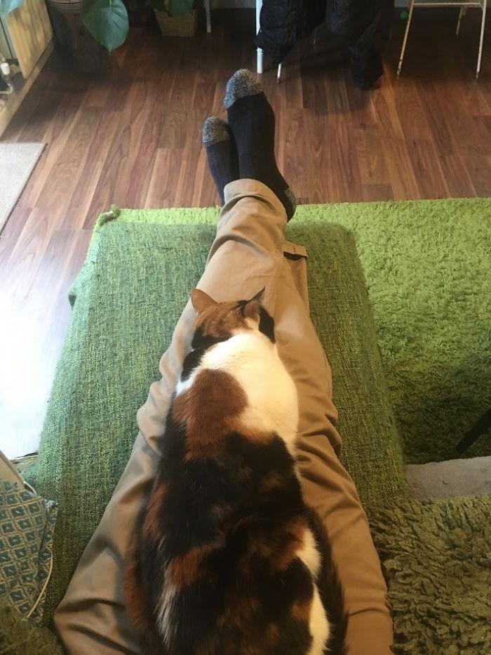ziggy the cat loves sitting on lap