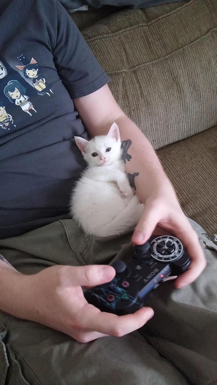 Kitten Sitting on Man's Lap