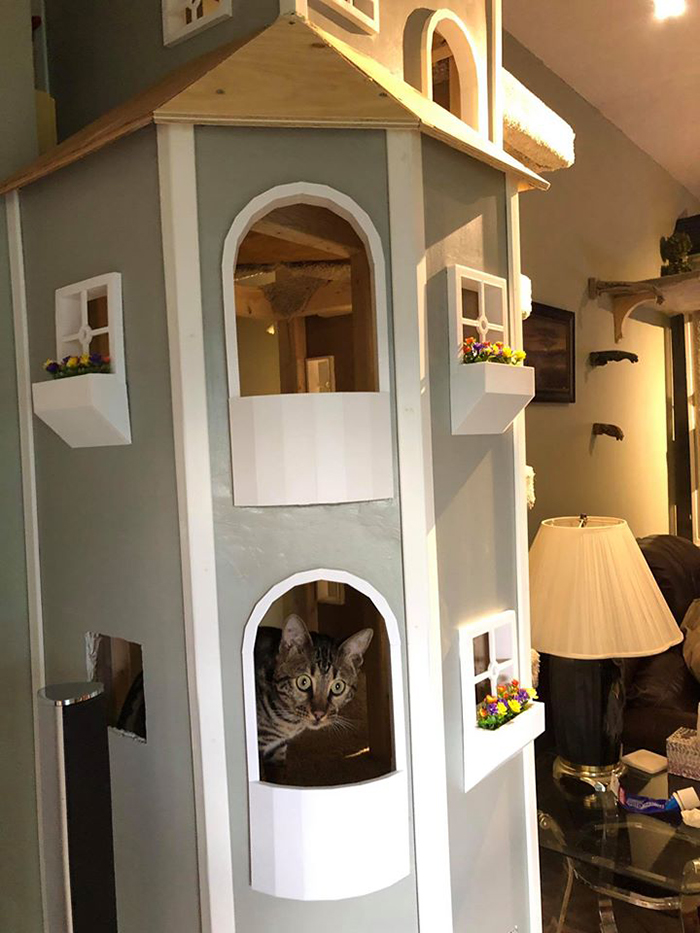 Cat inside Cat Castle