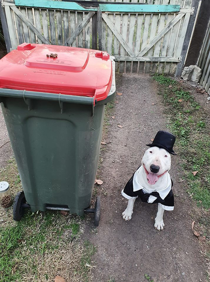 Dressed Up Dog Beside Trash