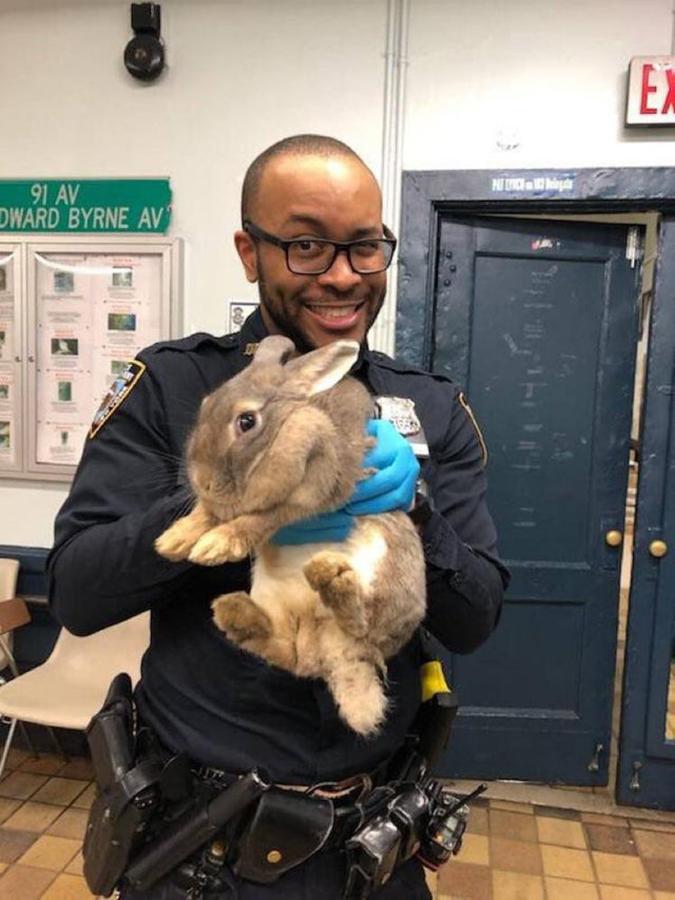 NYPD bunny