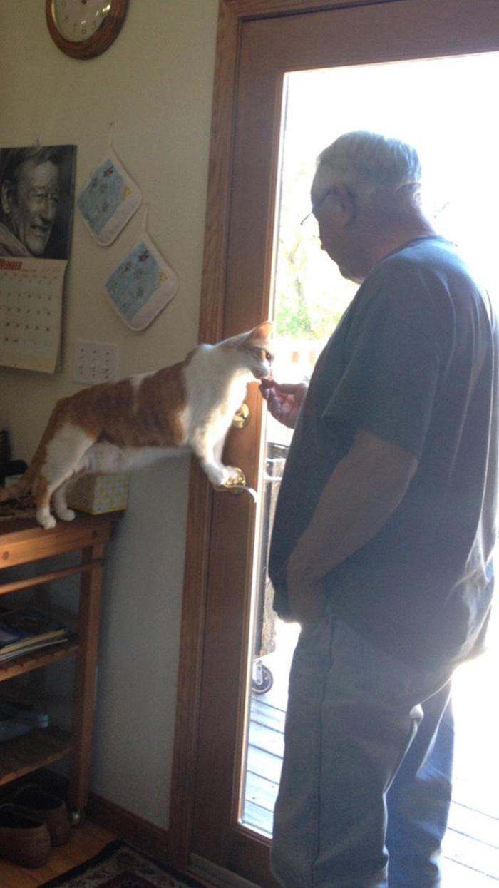 Old Man Feeding a Cat