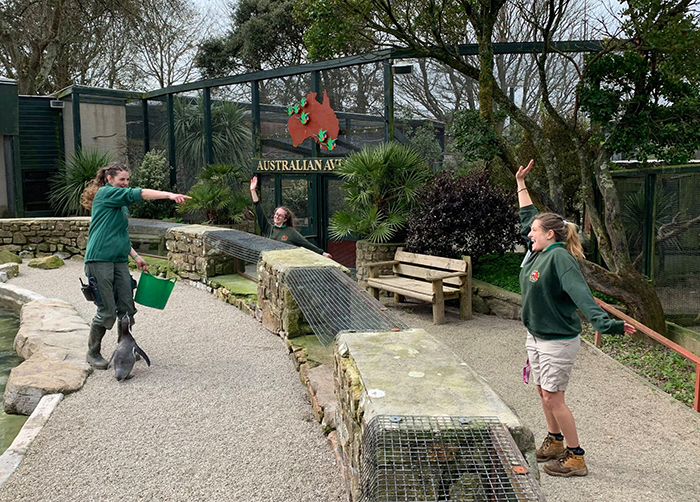 Paradise Park Zookeepers Self-isolate to Take Care of Animals