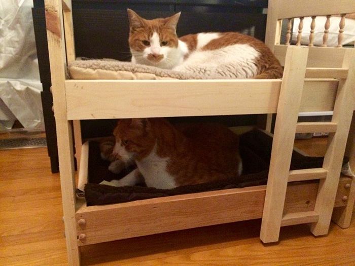People Who Didn't Want Cats Father Building Bunk Beds for Cats