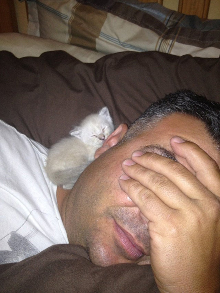 People Who Didn't Want Cats Father Sleeping with Kitten on Shoulder