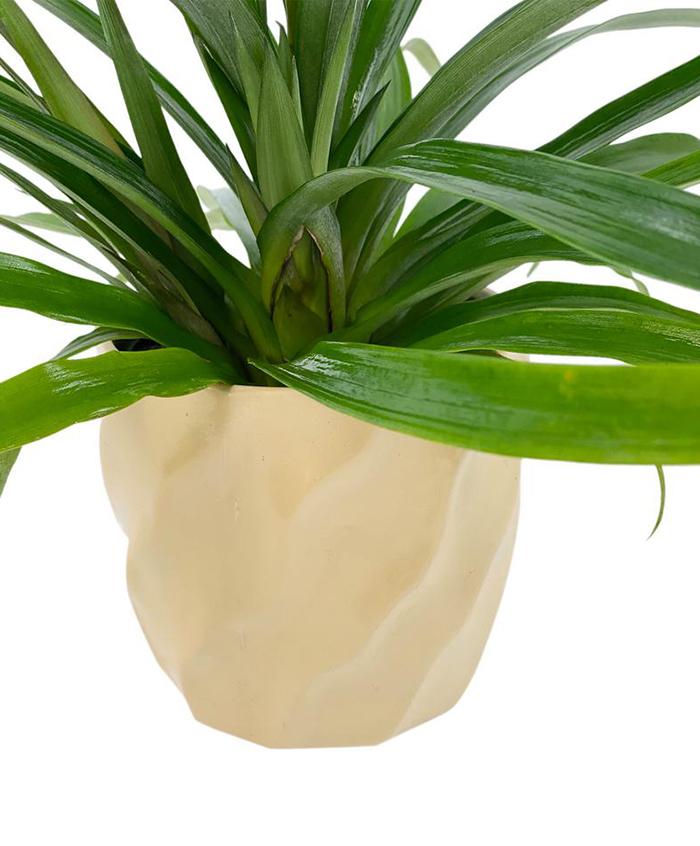 Pure Beauty Farms 5-inch Designer Pot