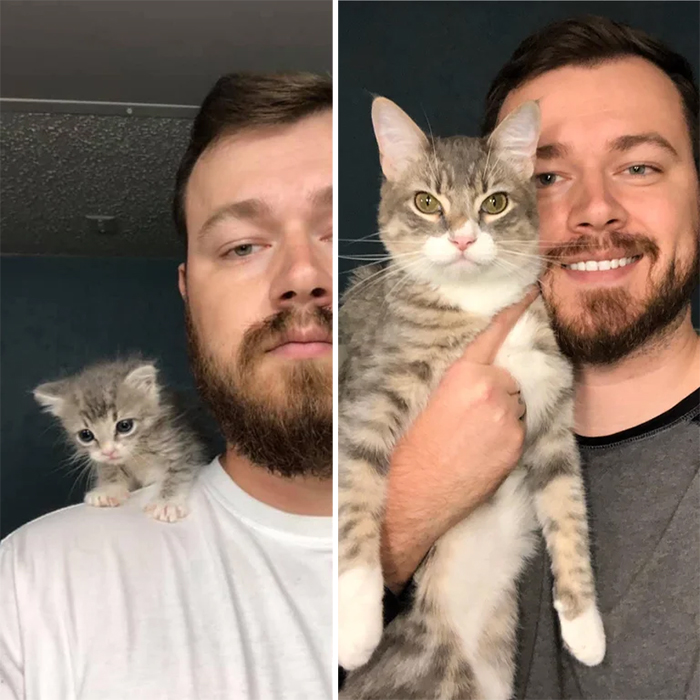 adopted cat grows up