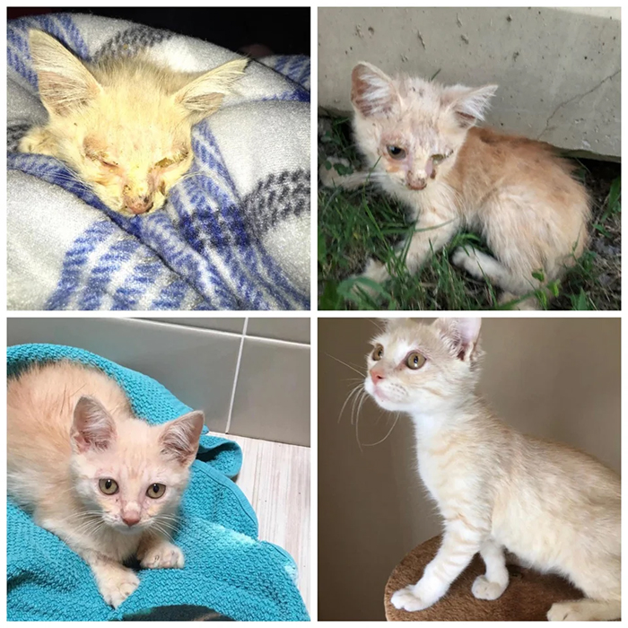 adoption transformation chelvin
