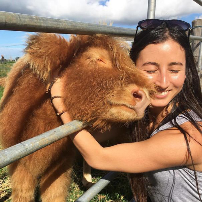 adorable cows affectionate