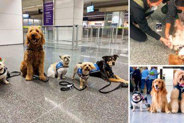 airport wag brigade