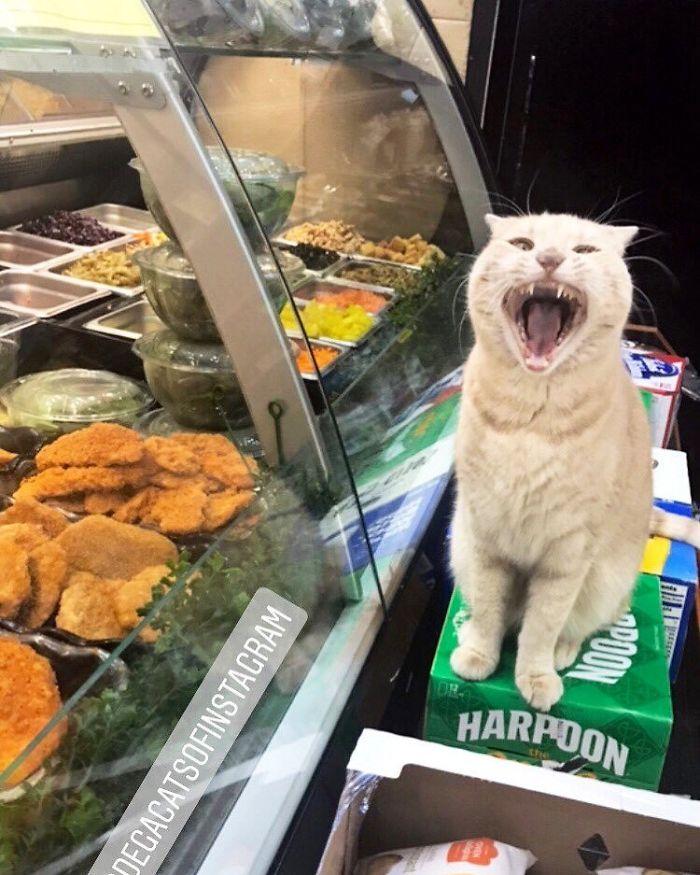 angry kitty food guardian