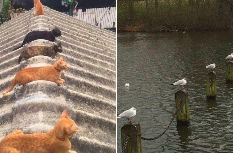 animals doing social distancing