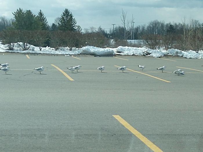 animals doing social distancing birds