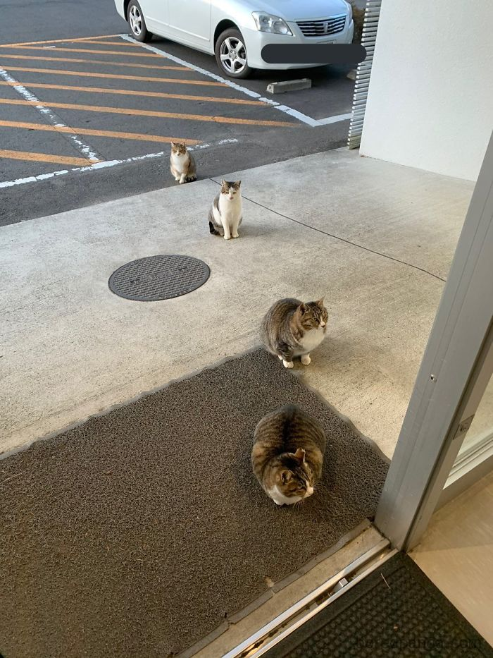 animals doing social distancing cats in line