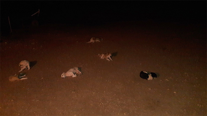 animals doing social distancing dogs at night