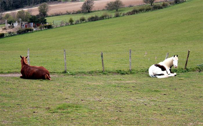 animals doing social distancing horses