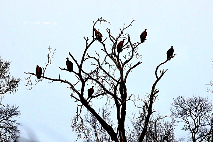 animals doing social distancing vultures