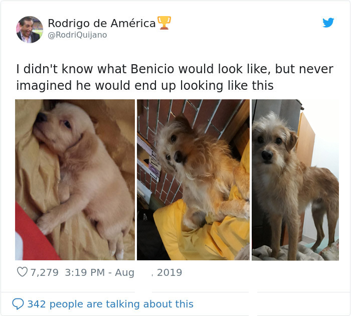 benicio puppy growing up
