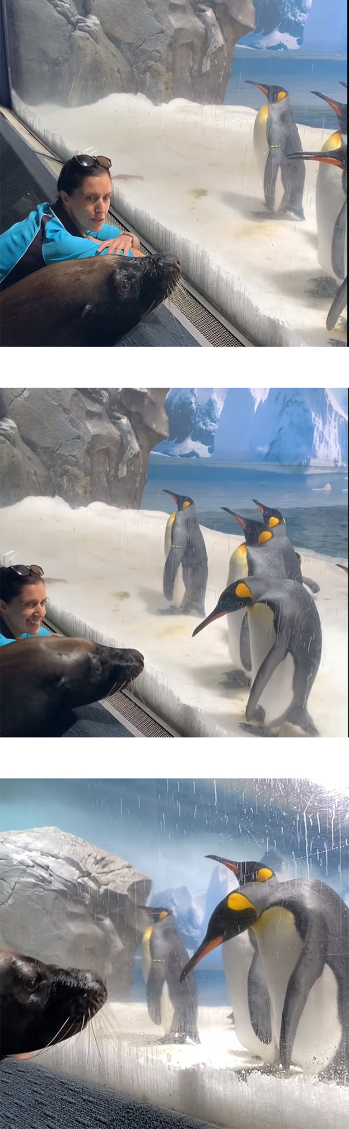birri junior the sea lion meets penguins