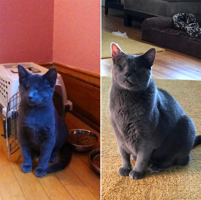 blind cat before and after adoption