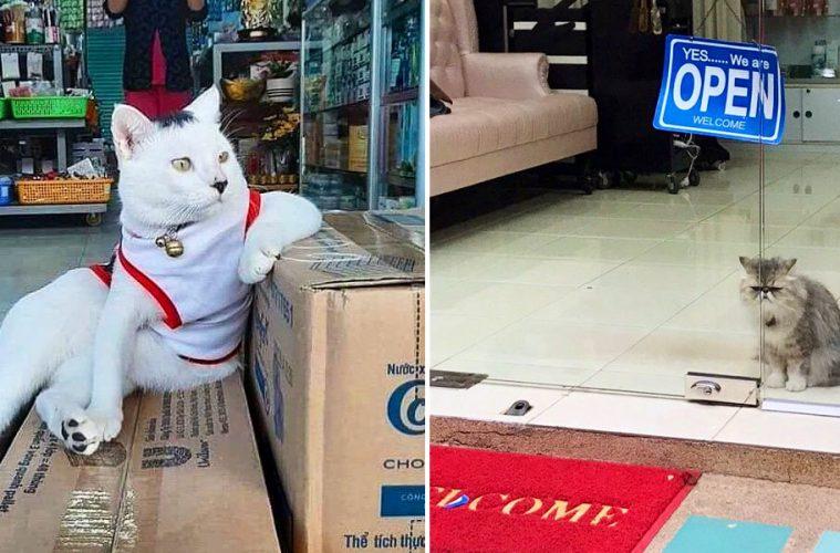 bodega cats in shops