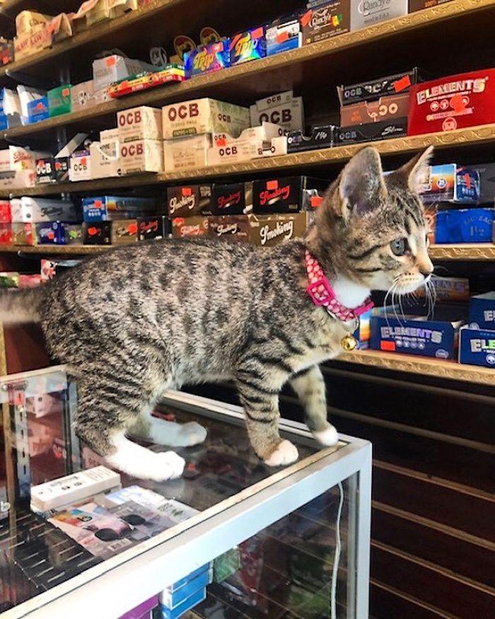 bodega kitten on the counter