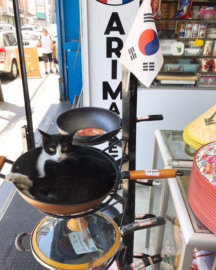 bodega kitties on cooking pan