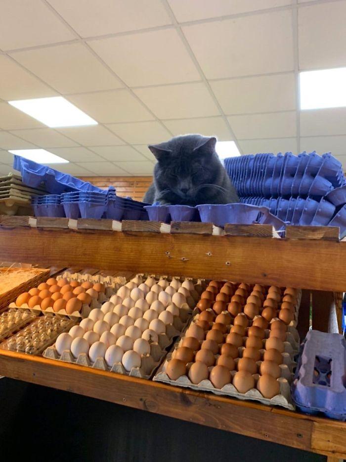 bodega kitty egg guardian
