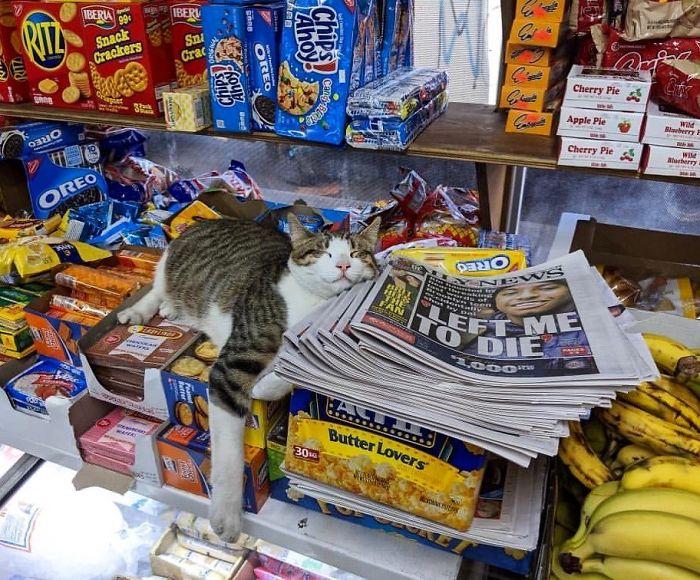 bodega kitty napping on goods
