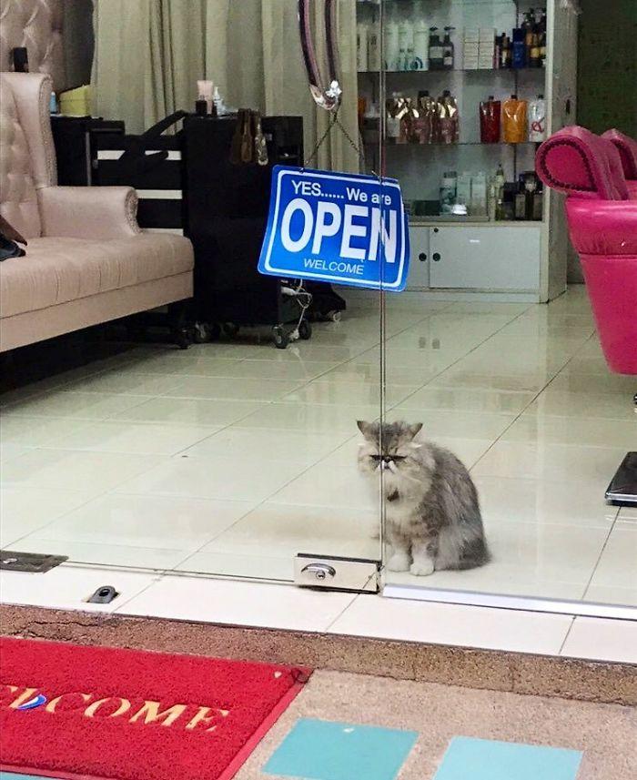 bodega kitty salon guard