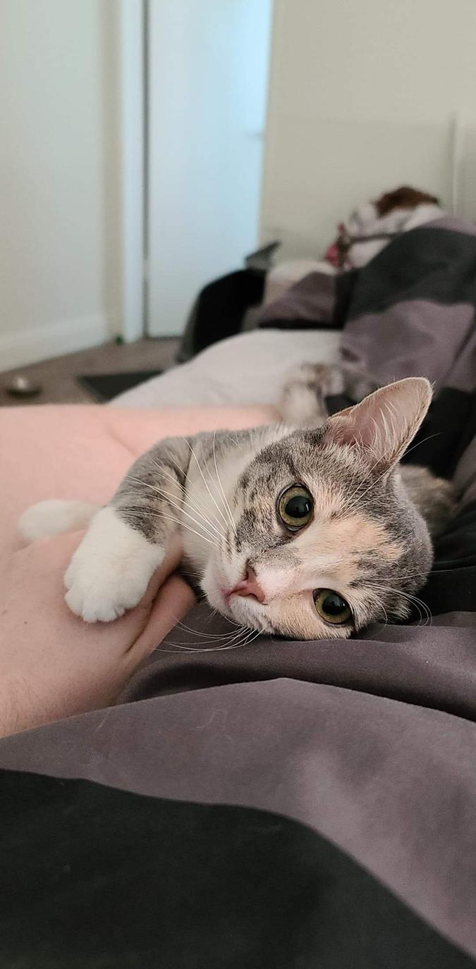 bonding kitten rescue pet photos