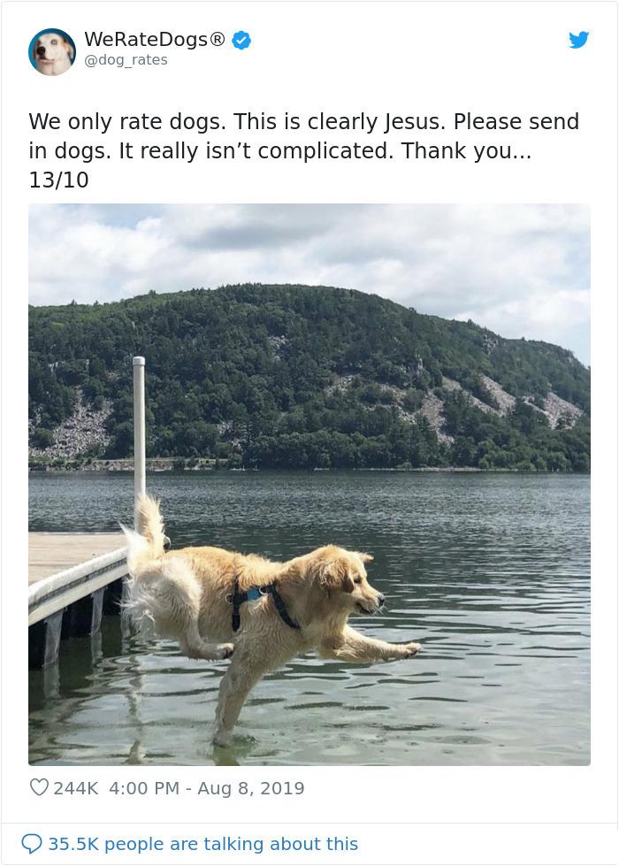 canine jesus walking on water
