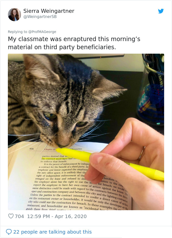 cat fascinated by pen highlighter