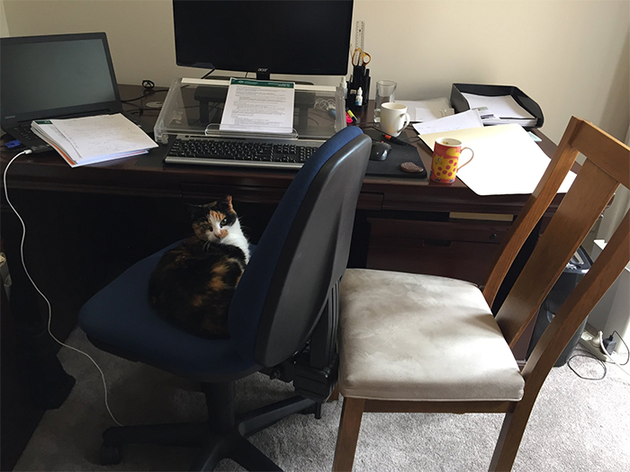 cat invades work station