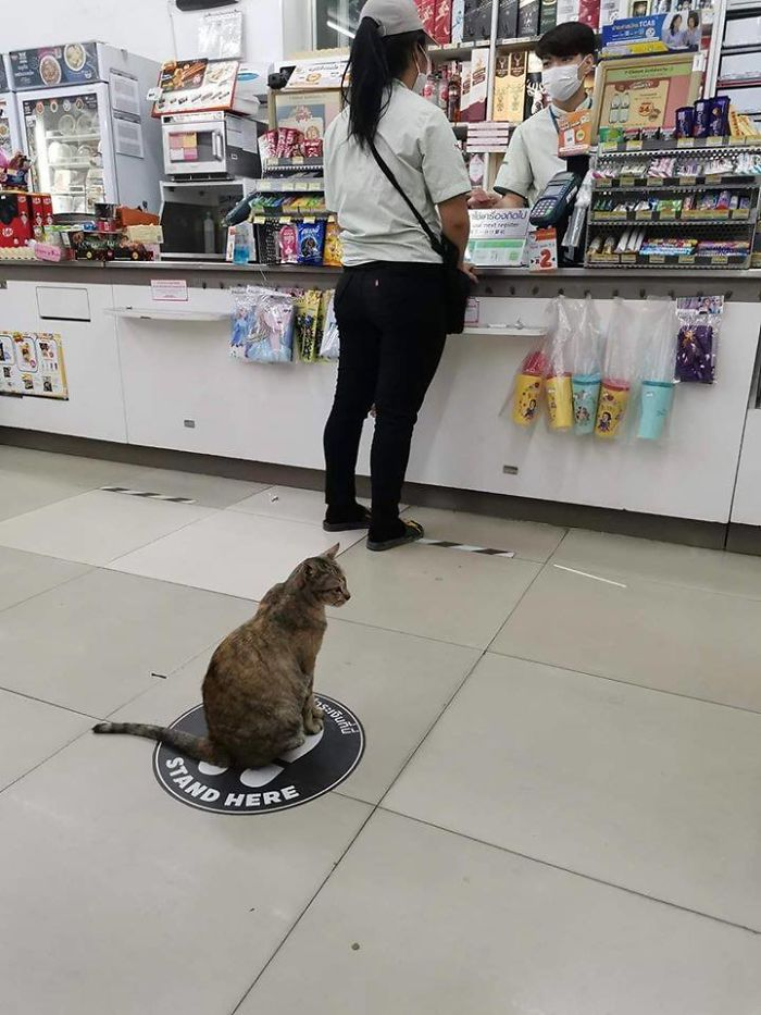 cat keeps space from people