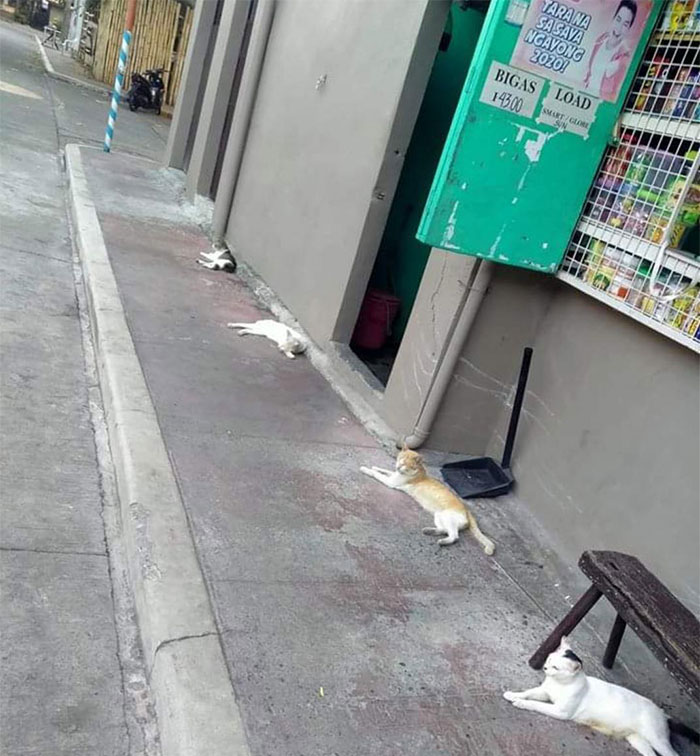 cats during pandemic crisis