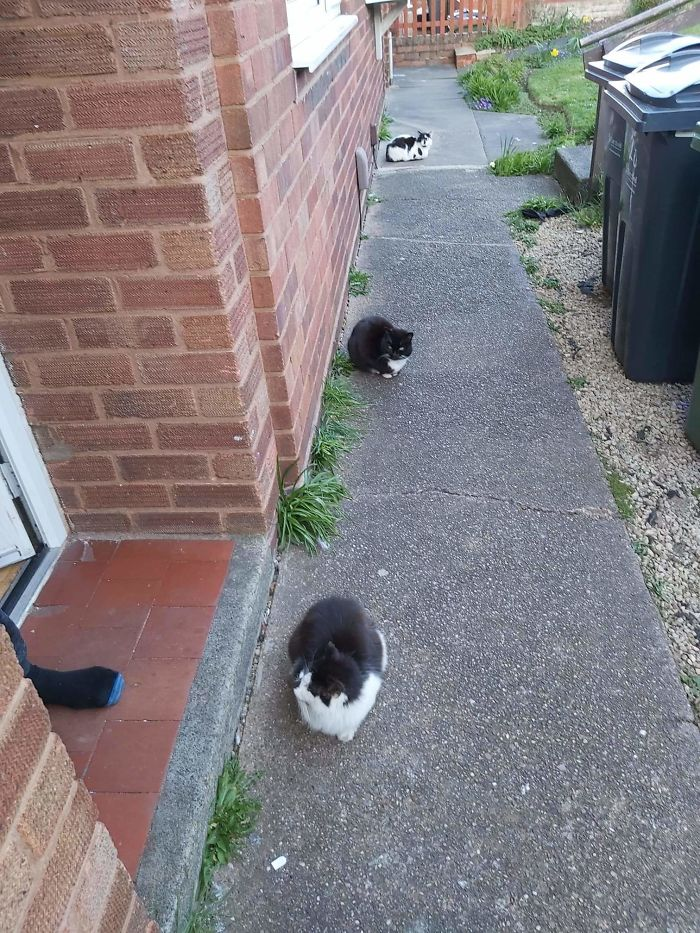 cats feet apart