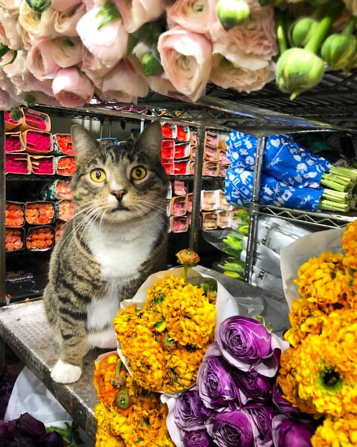 cats in shops flowers