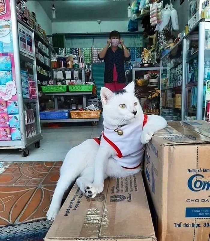 cats in shops look like they own the place