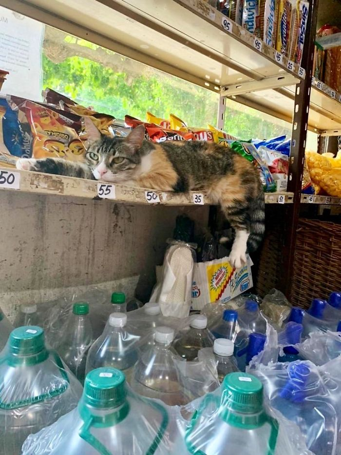 cats in shops lounging on the shelves