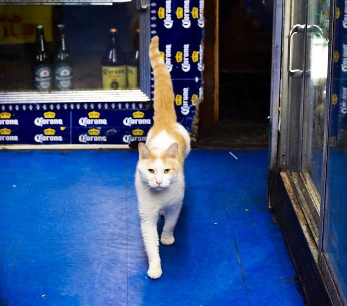 cats in shops stern guardian