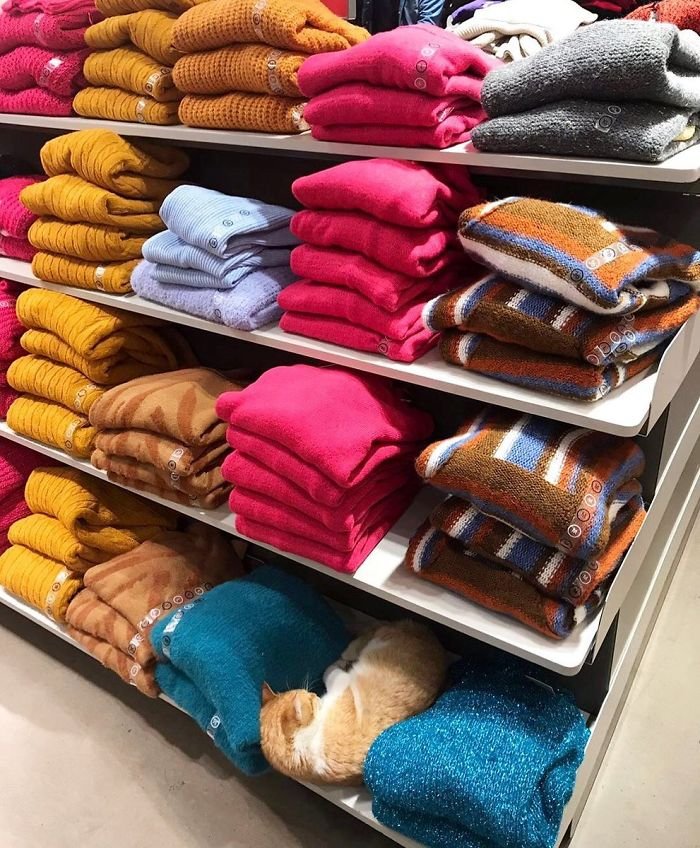cats in shops sweater aisle
